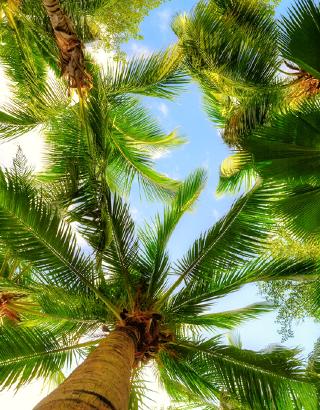 Sunshine Coast Tree Services