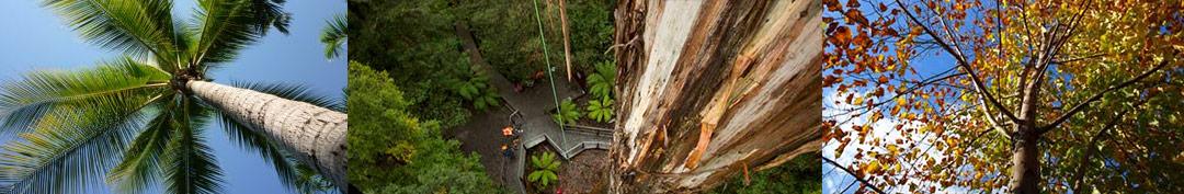 Tree Removals Sunshine Coast